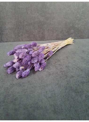 Kuru Çiçek Deposu Kuru Çiçek Kuş Otu 35-40 Cm  Koyu Mor  Mor